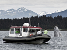 JU63, Juneau, Wilderness and Wildlife Tours, Beach and or Water Related Activities, Adventure Tours, whale, whales, boat, speed boat, Destination, Alaska